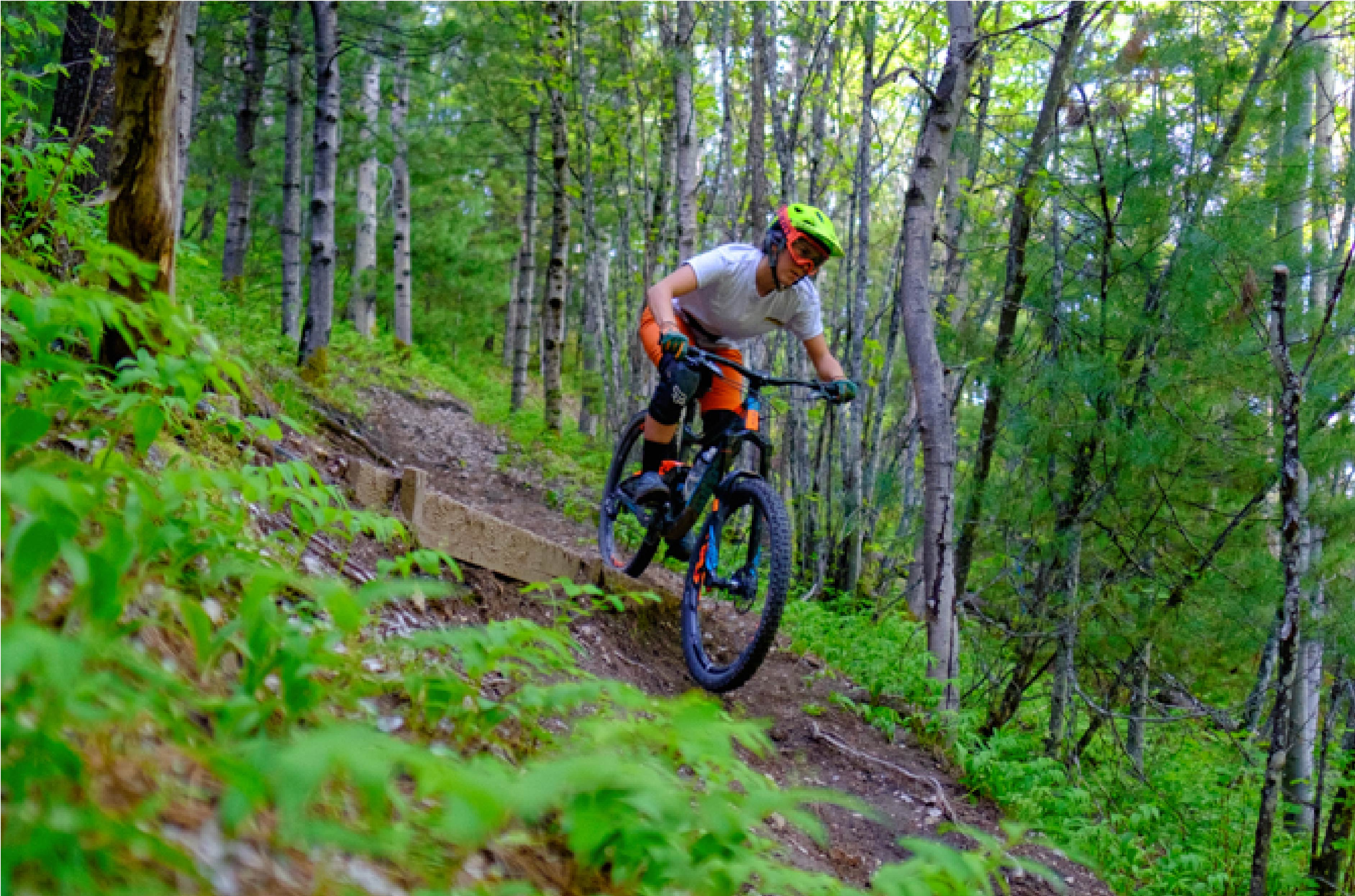 Person riding a bike down a dirt trail with green plants on either side