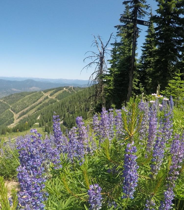 Hiking mobile image