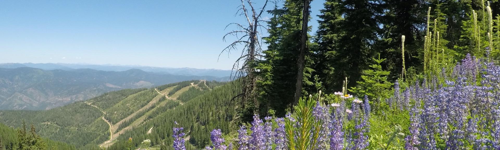 Hiking desktop image