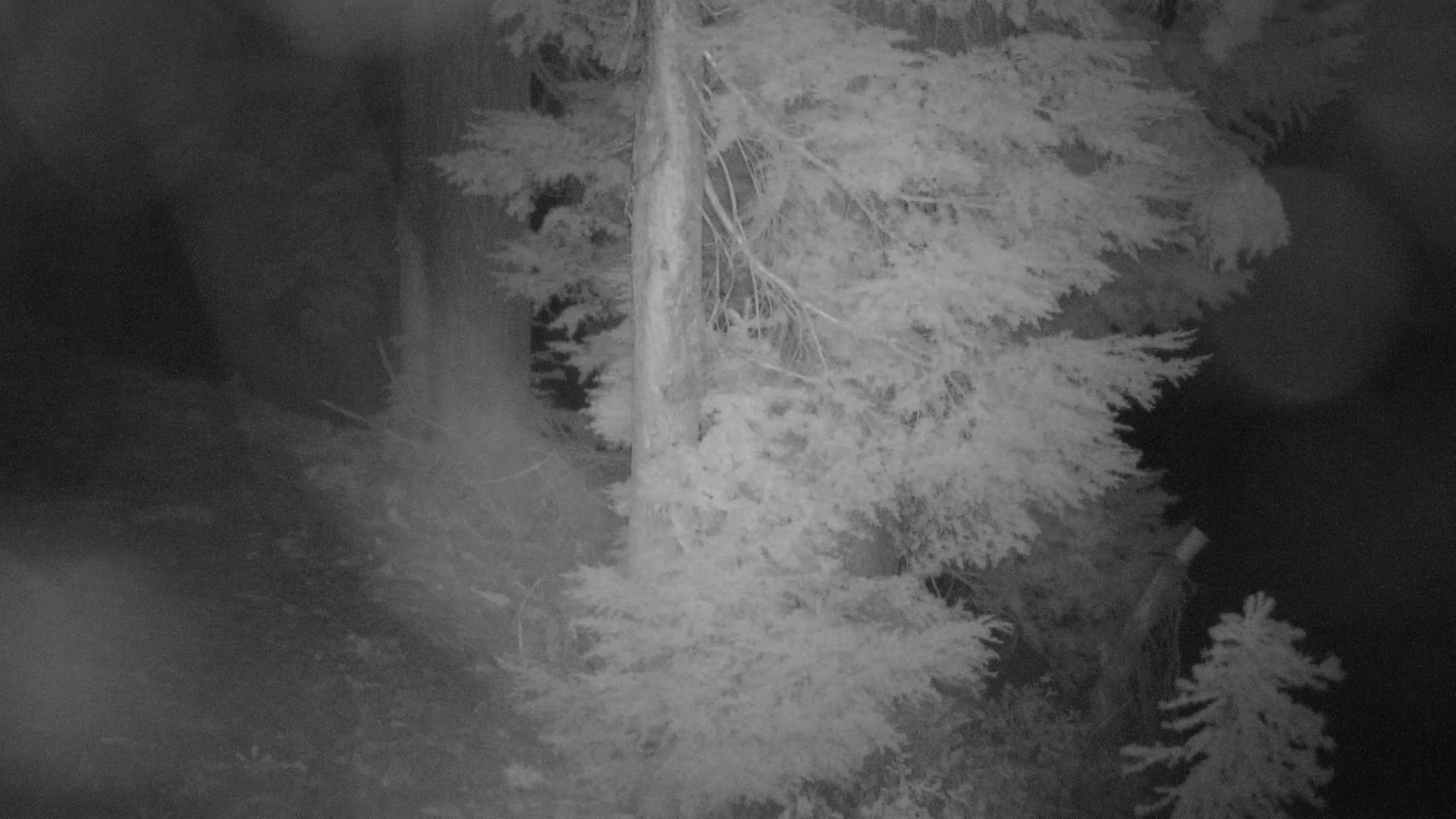 View of snow levels on Kellogg Peak.